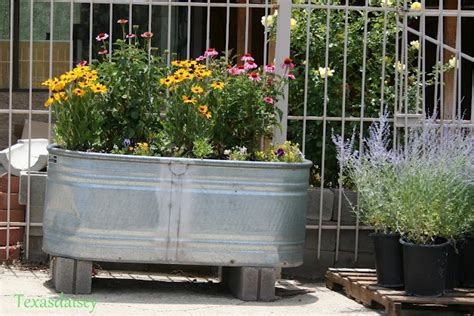 planter made from oval galvanized water trough behind my