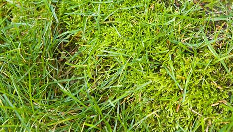 how to get rid of moss on patio stones how to get rid of moss on patio stones getting rid of moss in your lawn thriftyfun