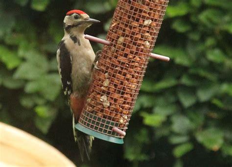 garden birds woodpeckers linda mellor writer photographer