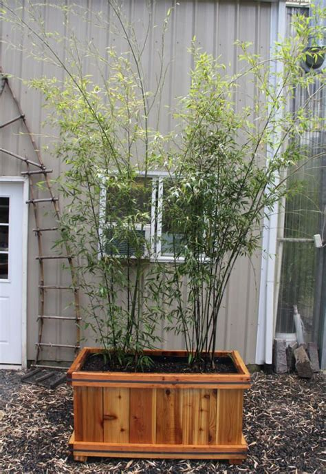 Bamboo Planter Boxes by 25 Best Ideas About Bamboo Planter On Bamboo