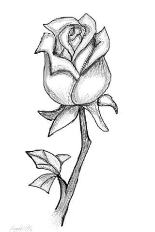 drawn rose full 3425364