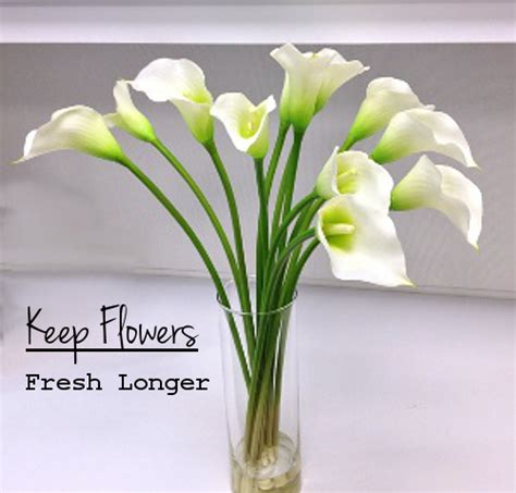 How To Keep Flowers In A Vase Alive by Keep Cut Flowers Fresh Longer Snappy Living