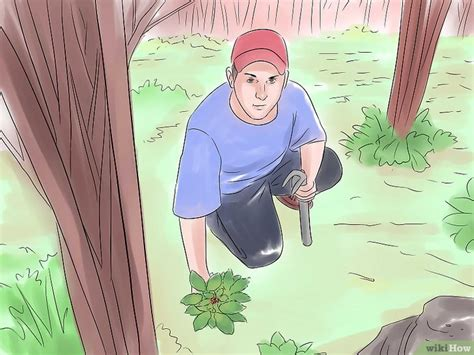 how to hunt for wild ginseng 11 steps with pictures wilden ginseng suchen wikihow