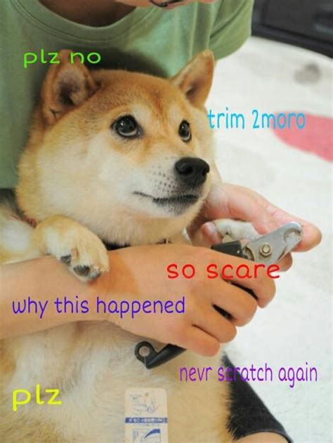 Doge Dog Meme - so if you know the quot doge quot meme or if you don t
