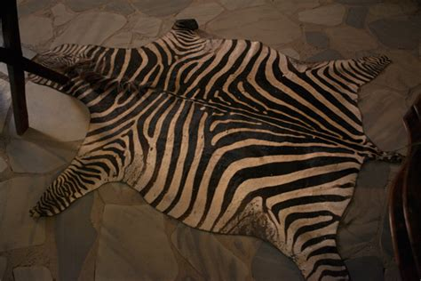 Faux Zebra Skin Rug by Faux Zebra Skin Rug Image Search Results
