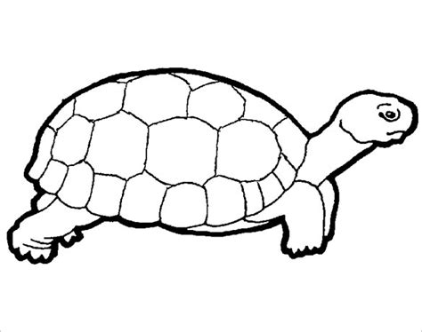 20 turtle templates crafts colouring pages free