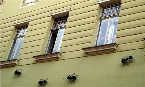 fourmis dans la maison d 233 barrassez vous des fourmis avant qu elles n entrent dans