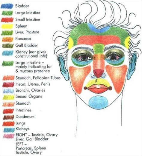 cystic acne diagram acne on causes by different parts of the