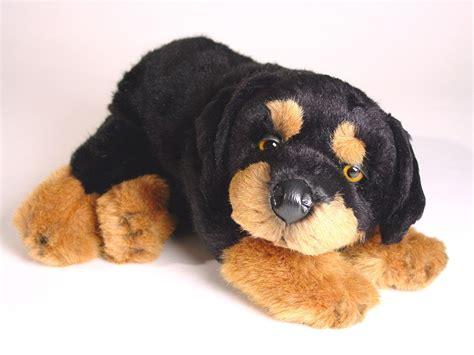 rottweiler stuff rottweiler puppy 3310 rottweilers dogs