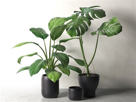 monstera ikea sinnerlig pots with monstera and peace