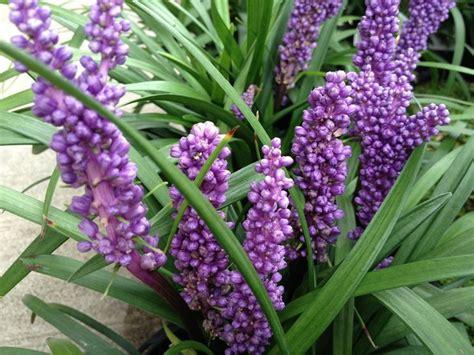 piante da giardino prezzi piante da giardino piante per giardino piante per il