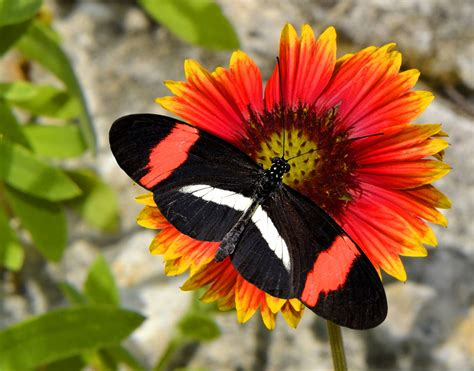 what colors attract butterflies list of flowers that attract butterflies