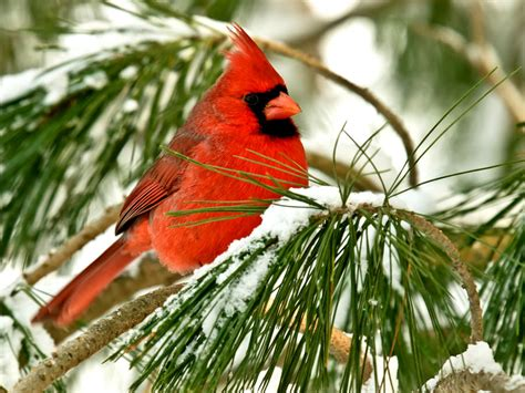 oklahoma winter bird atlas books more than a century of winter birds in america