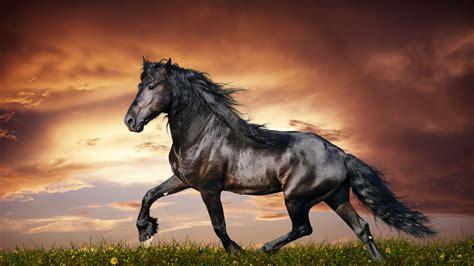 wallpaper for desktop running horse horse wallpapers hd pictures one hd wallpaper pictures