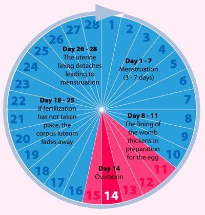 the best ovulation calculator the 25 best ovulation calculator ideas on