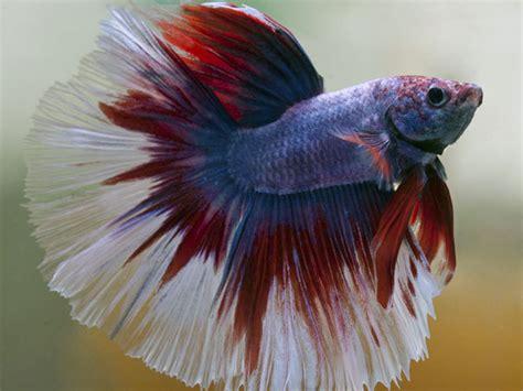 Best Fish For Office Desk Best Fish For Your Office Desk Boldsky