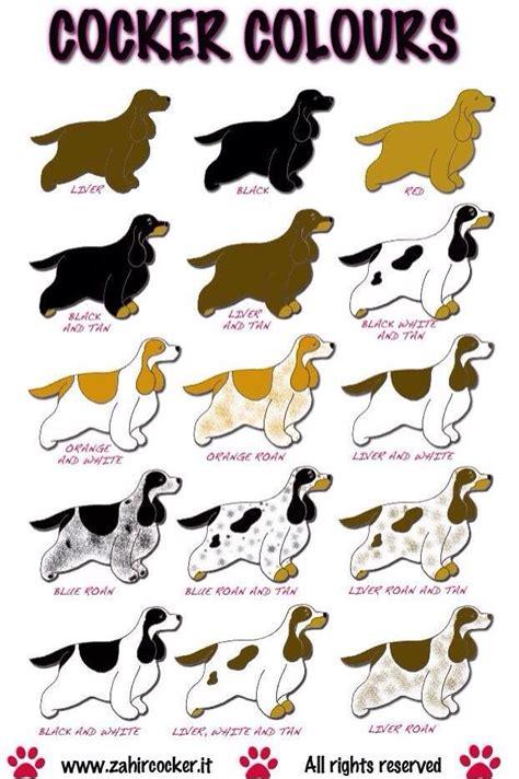 2063 best Dog♥Cocker Spaniel L♥ve images on Pinterest ...