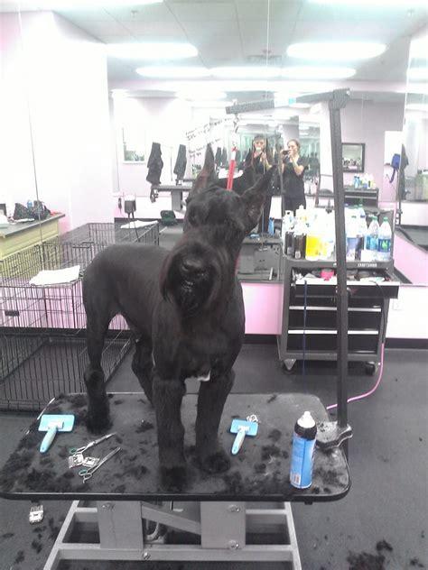 best in show grooming best in show grooming pet groomers las vegas nv united states yelp