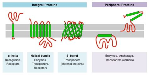 membrane proteins bioninja