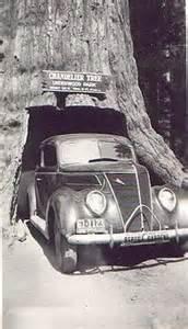 Chandelier Tree Leggett Avenue Of The Giants Wikipedia The Free Encyclopedia