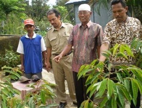 Bibit Sengon Di Jember desa kemuningsari lor panti coba kembangkan sector agrobisnis melalui bibit durian dalam pot