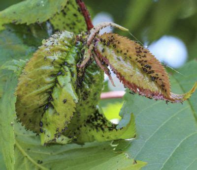 8 Ways To Deal With Pests by 17 Best Images About Fruit Fruits On