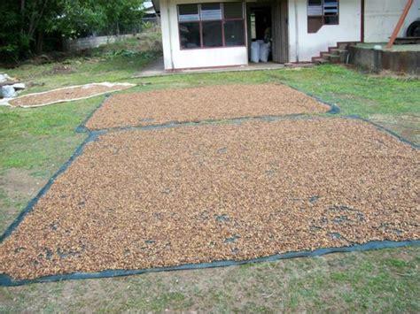 Midbass Genetic Cr 65 semillas de teca y melina certificada hojancha mercado