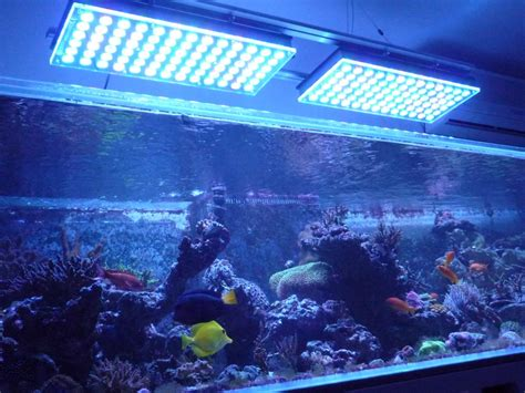 saltwater aquarium led lighting first client s tank display from france under orphek