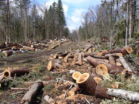 Mengupayakan Hidup Baik green community of smansasoo keserakahan dan kerusakan