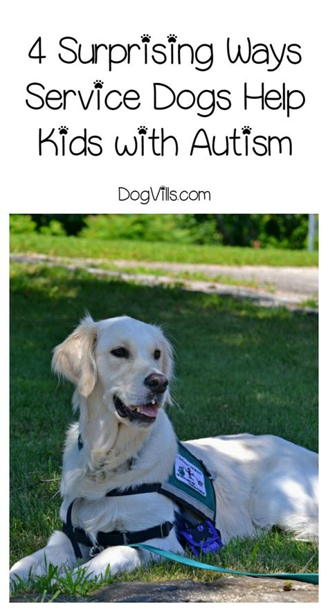 can dogs autism 4 amazing ways service dogs can help with autism