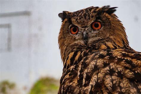 white  brown owl animal  stock photo