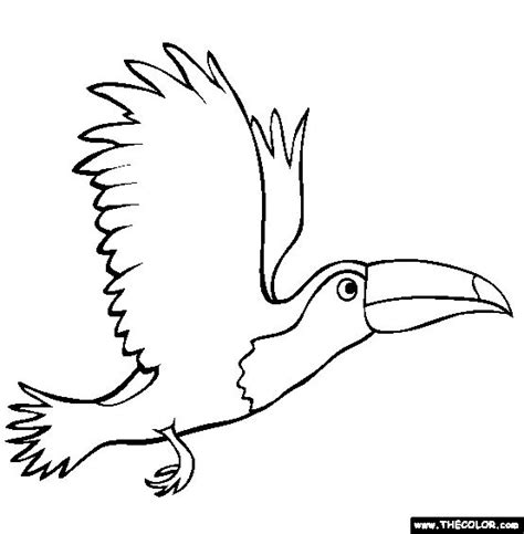 coloring page of a toucan bird 59 best images about vogels kleurplaten on pinterest