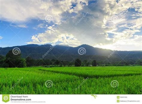 green food field a royalty free stock photo from photocase green rice field with mountains background blue sky