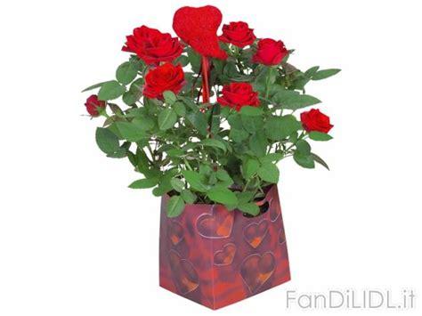 fiori lidl in confezione fiori fan di lidl
