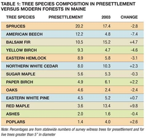 reconstructing   maine forests    articles features