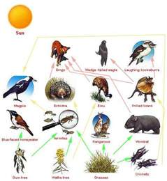 Dominant Plants In Tropical Rainforest - food web grassland biome 2012