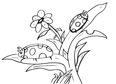 the grouchy ladybug coloring pages coloring home
