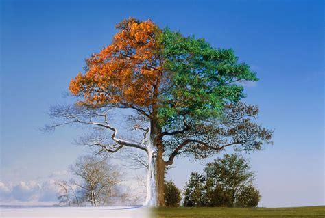 tree seasons come seasons 1848691815 four seasons of the year songs for kids