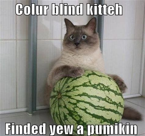 cats color blind 17 best images about color for the color blind on