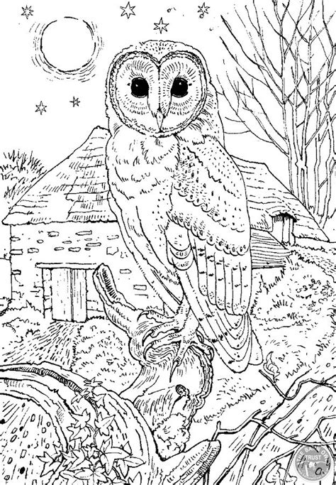 barn owl colouring page detailed coloring pages owl