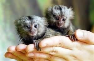 Tropical Rainforest Native Plants - animal life fiji rainforest