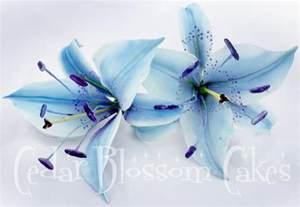 Stargazer lily colors body art tattoos pinterest
