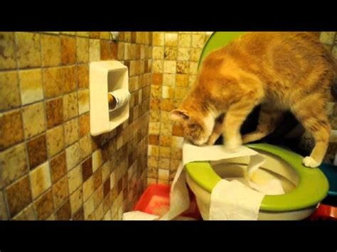 cat peeing in bathtub funny cat video cat uses toilet paper after peeing in