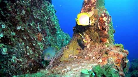 Flower Gardens Scuba Flower Gardens And Stetson Bank Scuba Diving Mv Fling