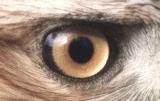 Hawkeye Handwrap Light Sky Blue hawk eye hawk heaven
