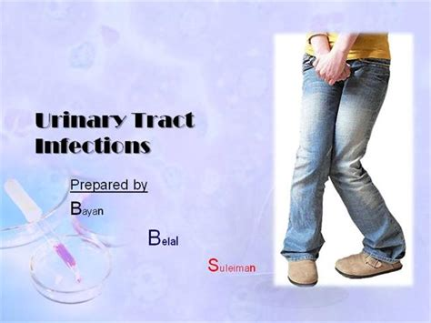 powerpoint templates urinary system urinary tract infections an overview authorstream