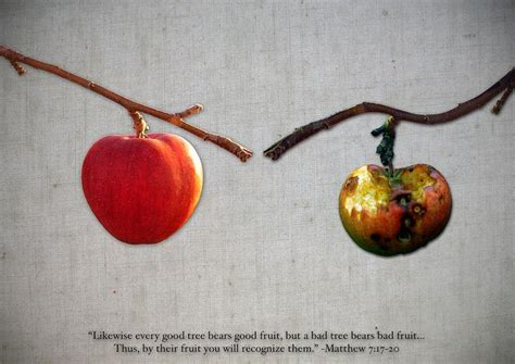 7 fruits in the bible 17 best images about bible fruit on