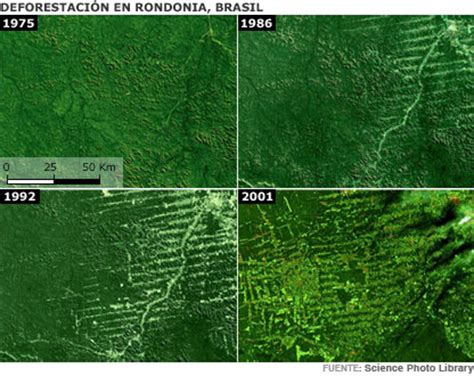imagenes satelitales brasil bbc mundo a fondo 2008 amazonas amazonas en gr 225 ficos