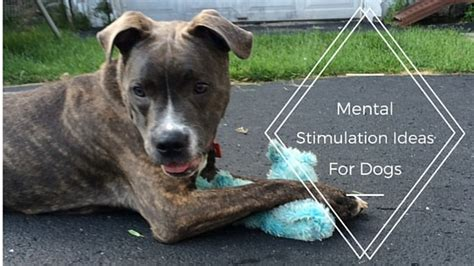 mental stimulation for dogs enrichment ideas for dogs the modern trainer