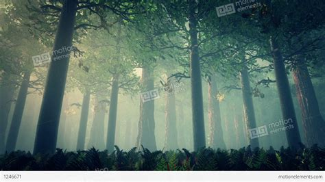 forest render deep forest fairy tale scene 3d render stock animation